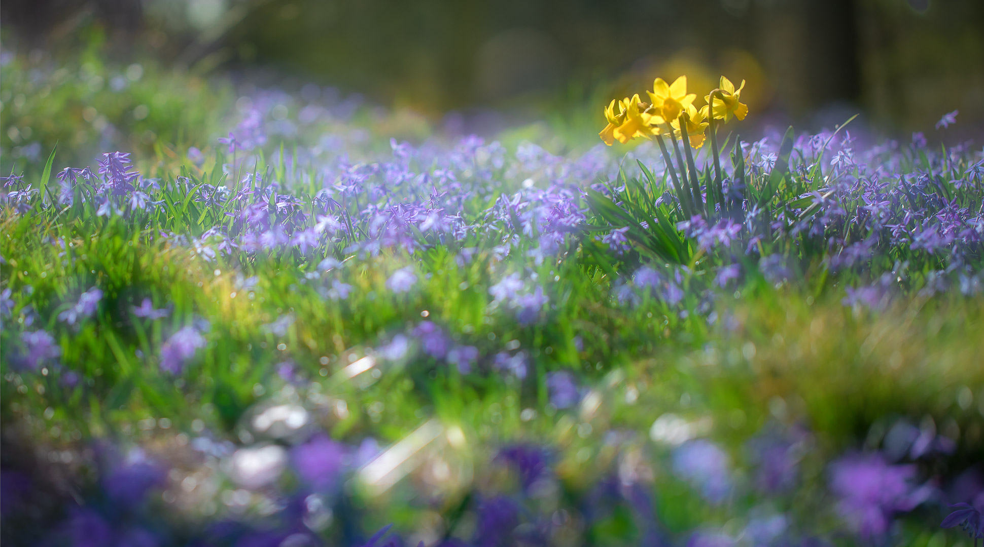 Frühlingserwachen / awakening of spring
