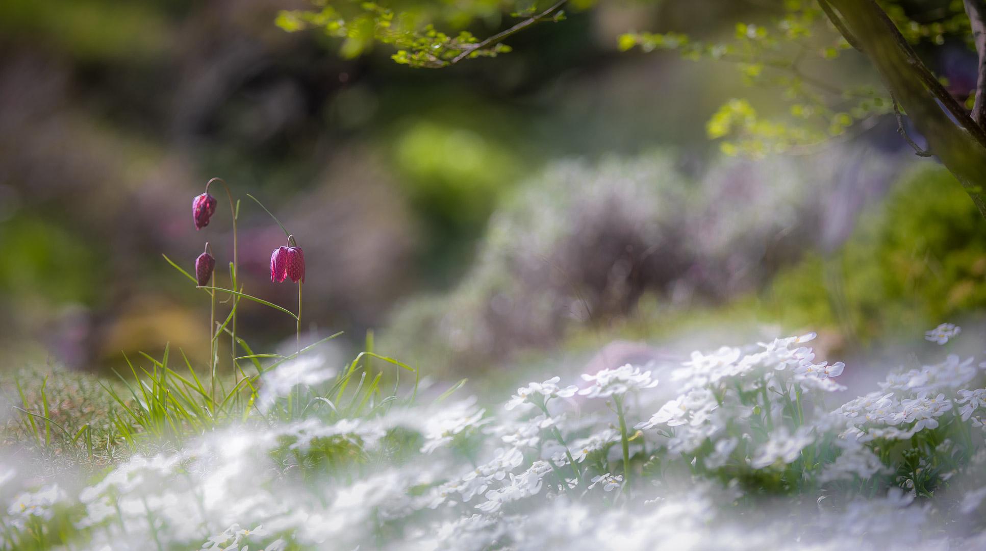 Frühlingsidylle / spring idyll