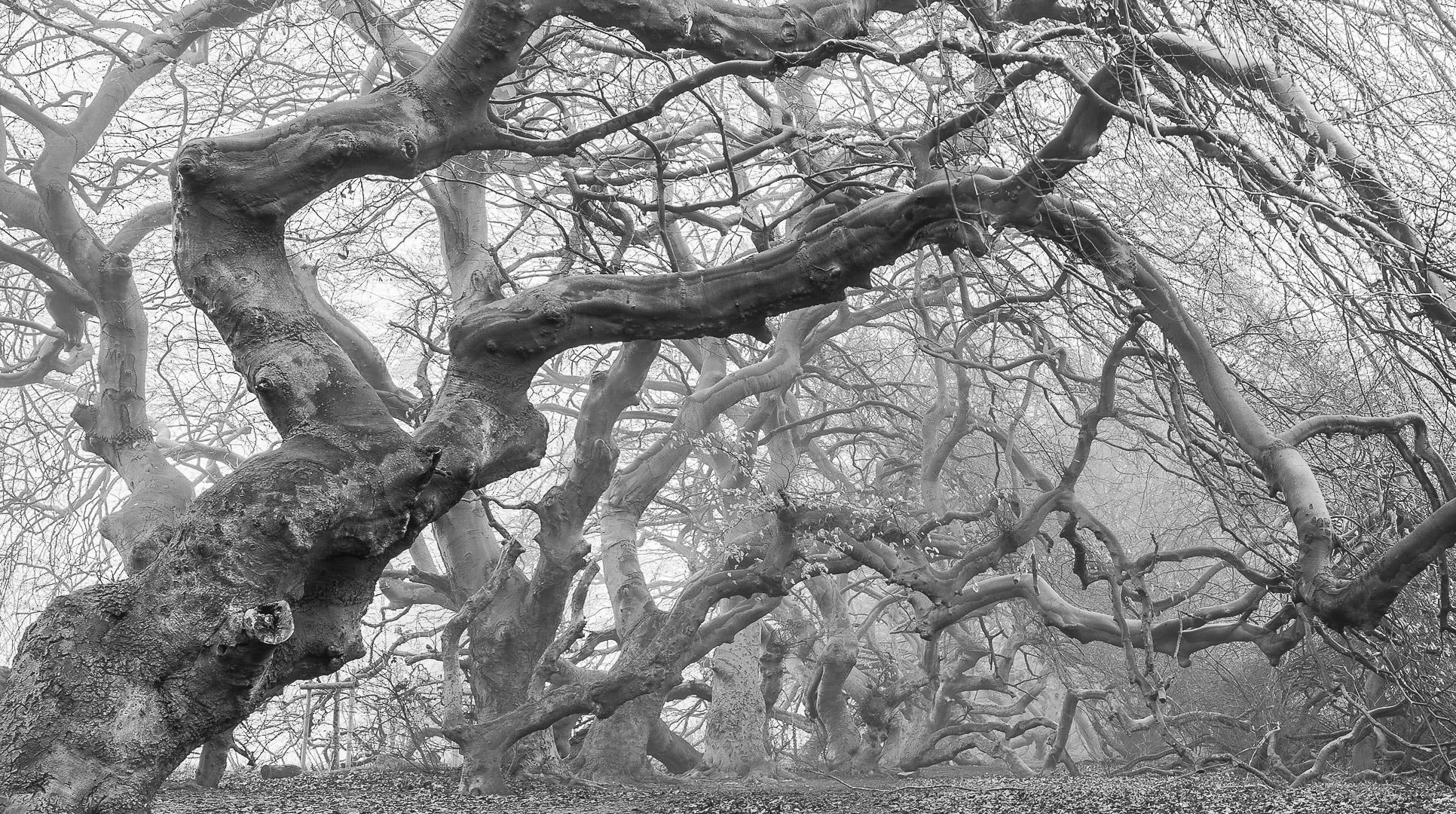 Nebelwald / foggy forest
