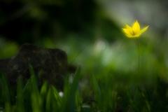 Gelbe Blume / yellow flower