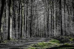 Frühjahr im Wald/spring in the forest