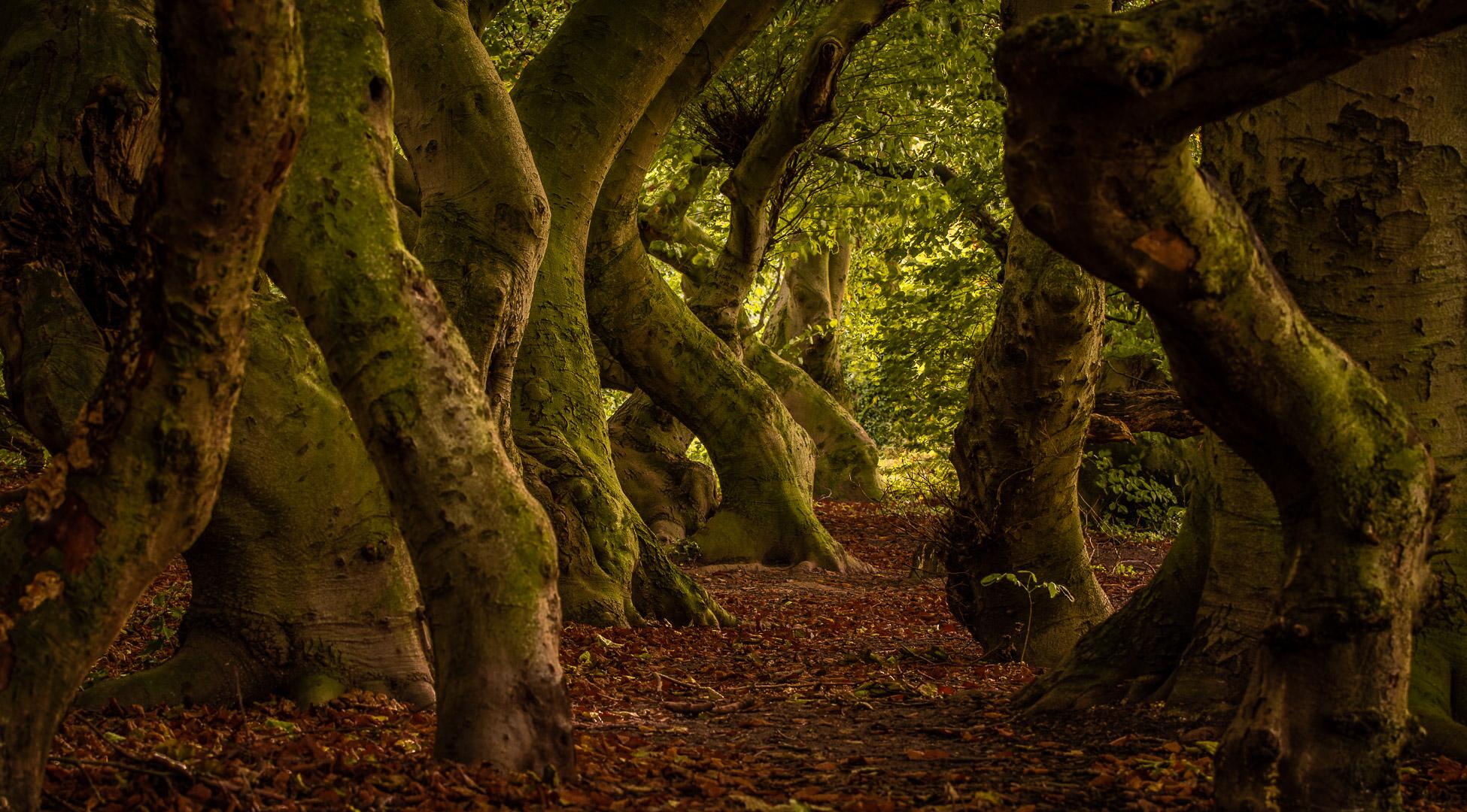 Märchenwald / fairytale forest