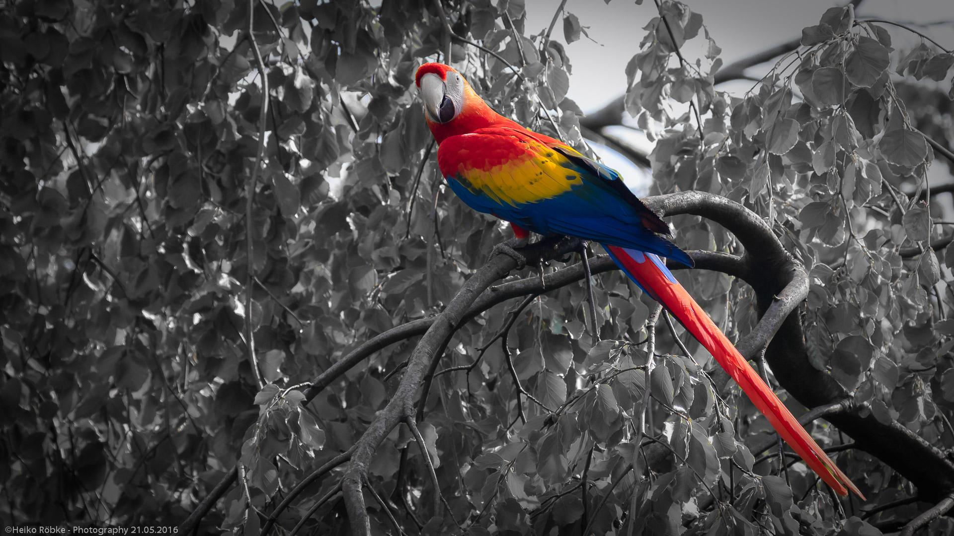 Vogelpark Walsrode