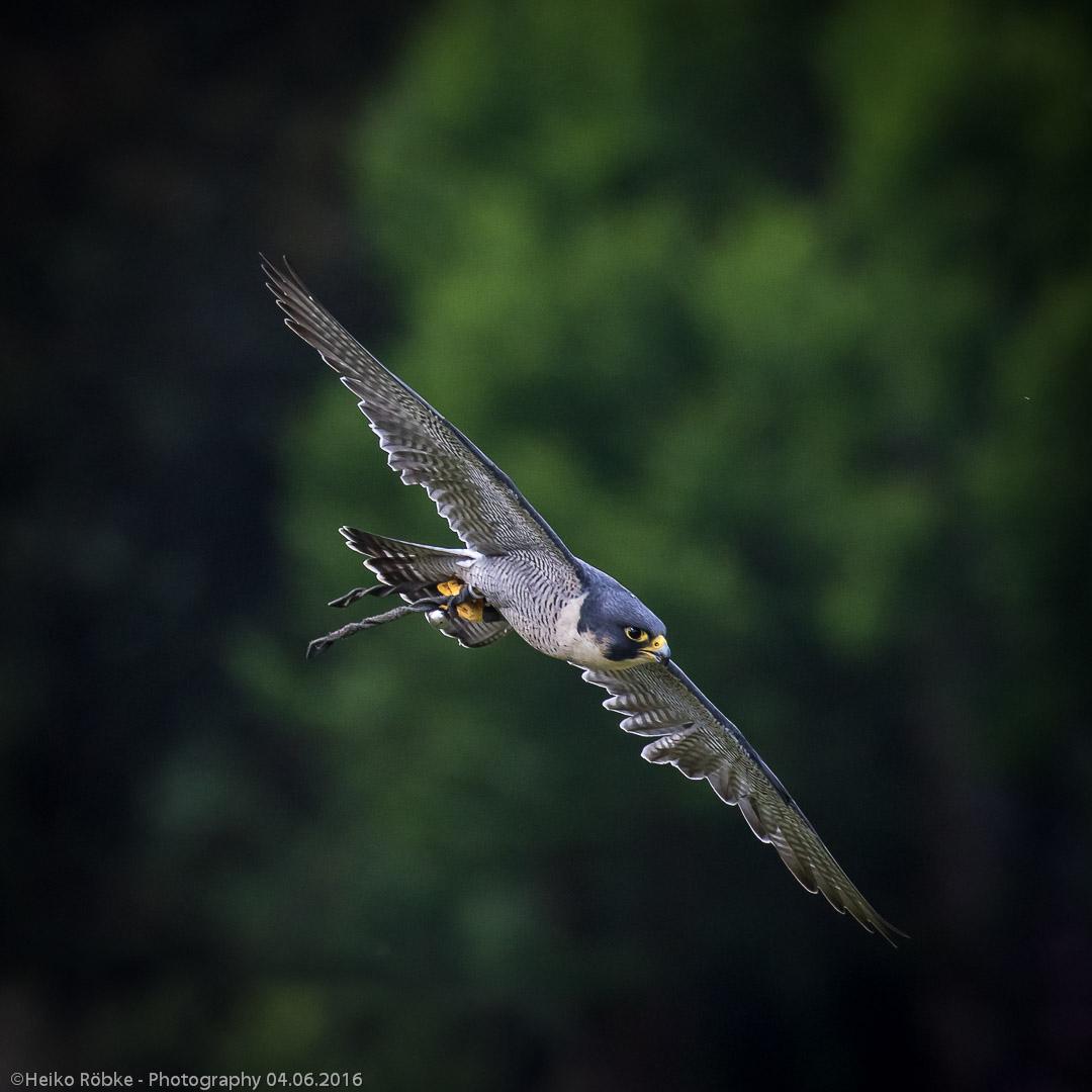 Weltvogelpark Walsrode 2016